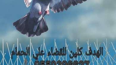 Photo of شركة مكافحة الحمام بحائل
