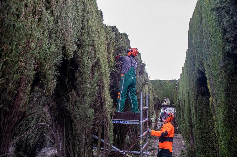 La Alhambra restaura las topiarias de los Jardines de la Rosaleda de Torres Balbás en el Generalife