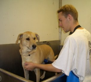 Dog Grooming at Porter Road Pet Care