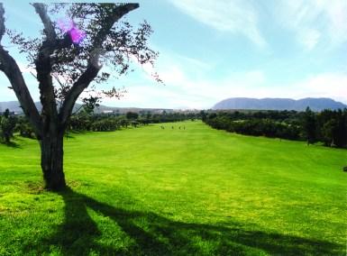 El plantio golf (4)
