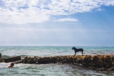 Playa Agua Amarga, La playa para perros de Alicante. Doggy Beach