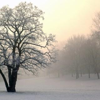 Wintermorgen im Nordpark
