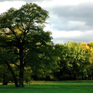 Herbst im Nordpark