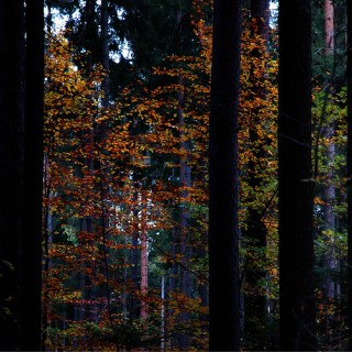 Fenster zum Wald