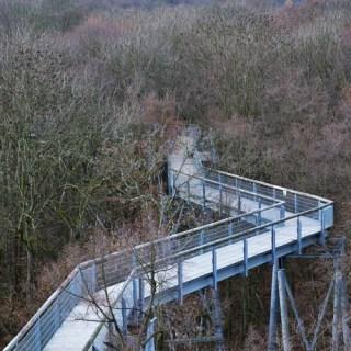 Hainich - Baumkronenpfad
