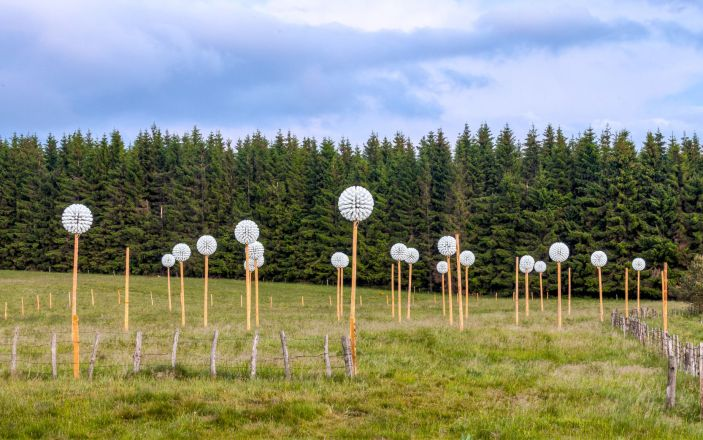 Pappus Lactés - Alice et David Bertizzolo - Festival Horizon Arts natures en Sancy - Lac de Bourdouze - Massif du Sancy - Puy de Dome - France - Juin 2015 - Crédit photo Tiphaine Buccino - Les pissenlits installés