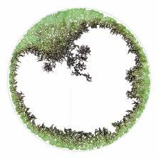 Lichens /Alice Heit 2006