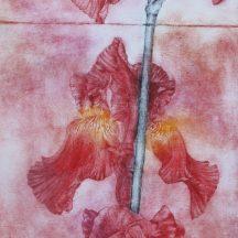 Iris (détail), pointe sèche sur Tetrapack.