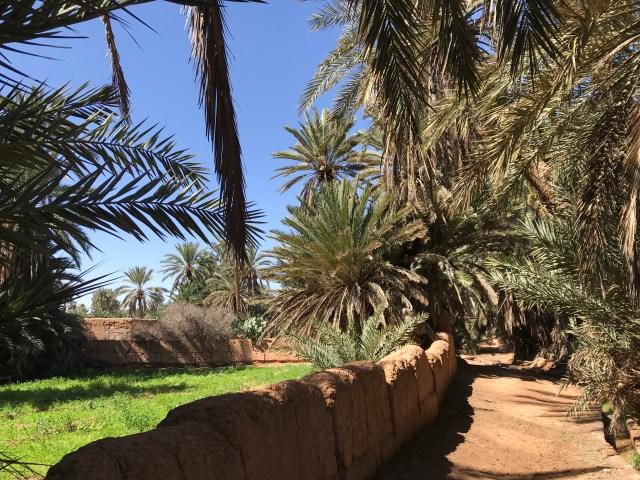 Moroccan Oasis Tighmert