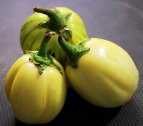 aubergine africaine (Zong)