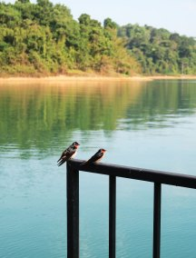 birds-on-lake