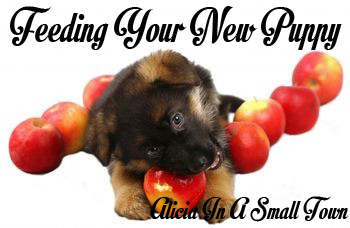 A guide to feeding your new puppy. What to feed him, a feeding schedule, and your puppy's nutrition! By Alicia In A Small Town