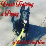Dog Days: Leash Training A Puppy