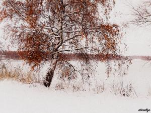 Autumn Snow II