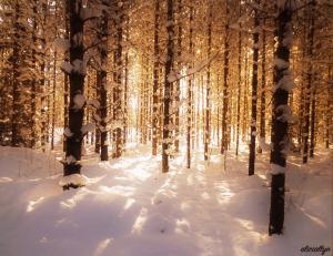 Snow Glow II
