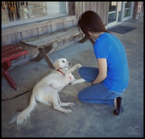 Miriam - Blanco - Petting Dog - Sig - F