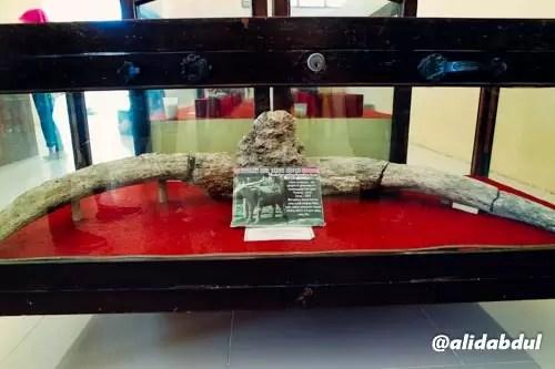 Museum Trinil Alid (3)