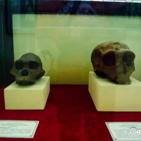 Museum Trinil Alid 5