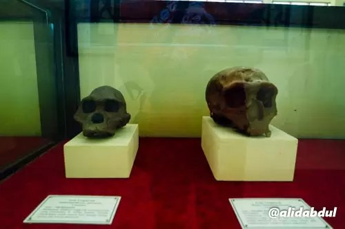 Museum Trinil Alid (5)