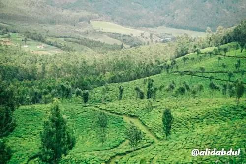 Munnar Kerala Alid Abdul 5