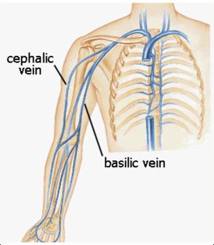 cephalic vein anatomy aliem