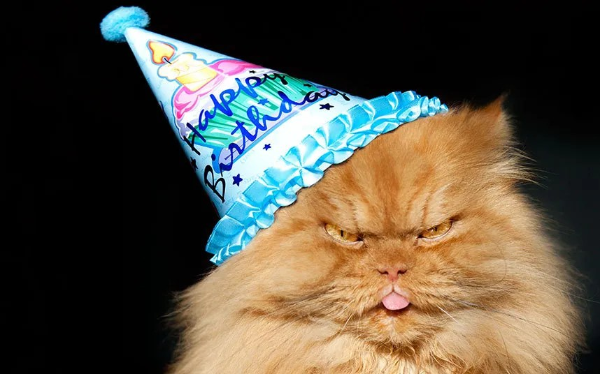 Angry_Cat_BDAY_3269980k
