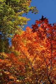 fall leaves1