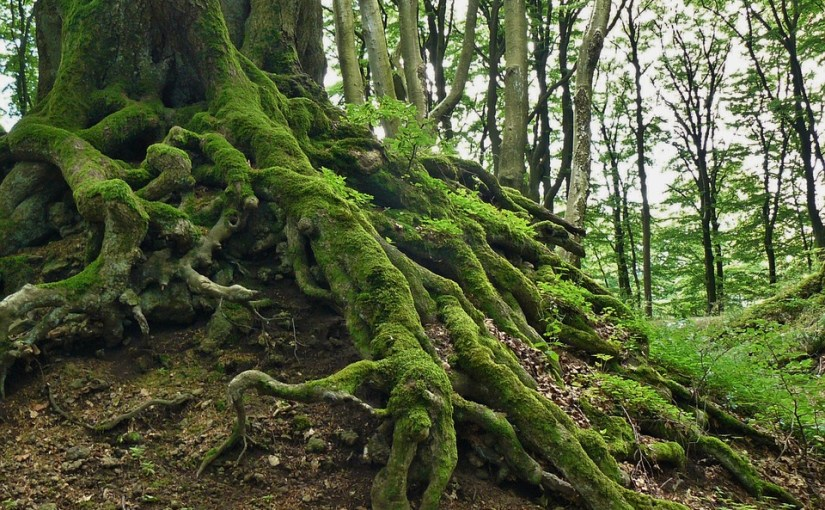 Forbidden Roots