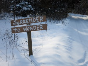 Surrender to Wonder 2