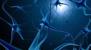 beynin-bolumleri Beynin Çalışma Prensipleri Hakkında Beynin Çalışma Prensipleri Hakkında beynin bolumleri