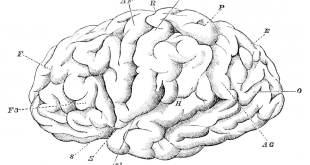 insan beyni Beyin Üzerine Son Kuramlar Beyin Üzerine Son Kuramlar Nedir? insan beyni