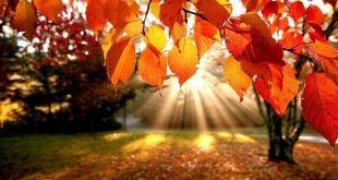 sonbahar-yapraklar  Sonbahar Mevsimi | Kasım 2014 sonbahar yapraklar