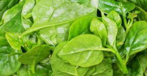 Beneficios de las espinacas para la salud