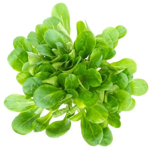 las mejores hortalizas verdes para ensaladas - canónigos