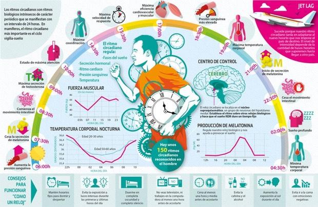 Los ritmos biológicos: cómo influyen en la salud y el bienestar
