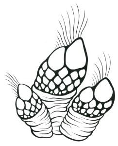 barnacle copia copia