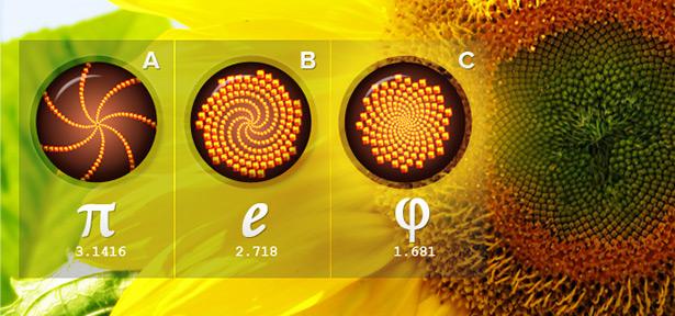 Spirals-Bunga-Matahari