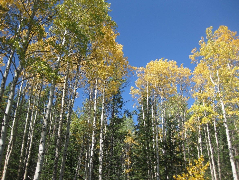 Banff Day 1 (51)