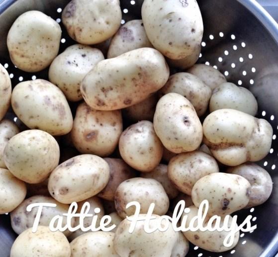Potatoes, Tattie Holidays