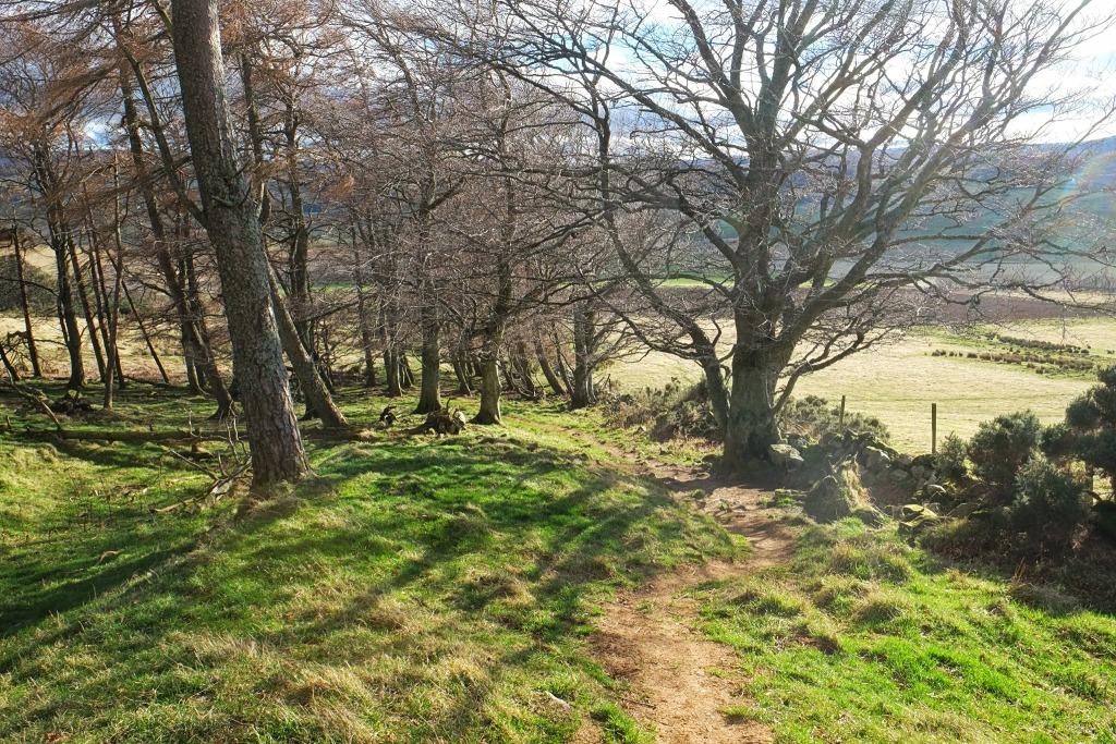 Aberdeenshire Walk, Shire, Noth o' Tap, #48walks