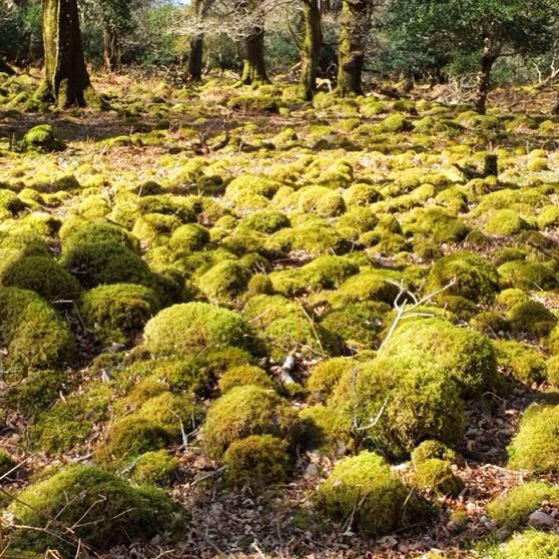 Snapshots of Ireland, County Kerry, Killarney, Tomies Mountain