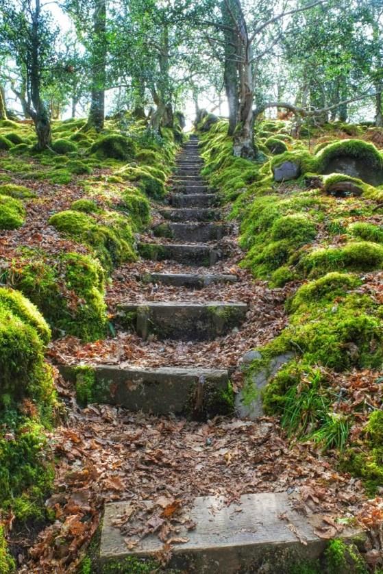 Killarney National Park Walk, County Kerry, Killarney, Ireland, Walks, #48walks