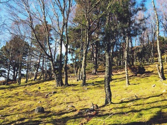 Cairngorms, Highlands, Scotland March Walks, Snapshots of Scotland