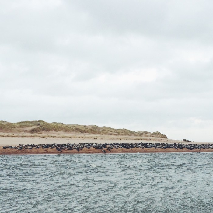 Newburgh Beach, Sand Dunes, Seals, Scotland