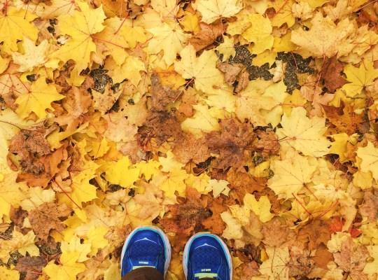 Fall, Autumn, Snapshots of Tubingen, Germany