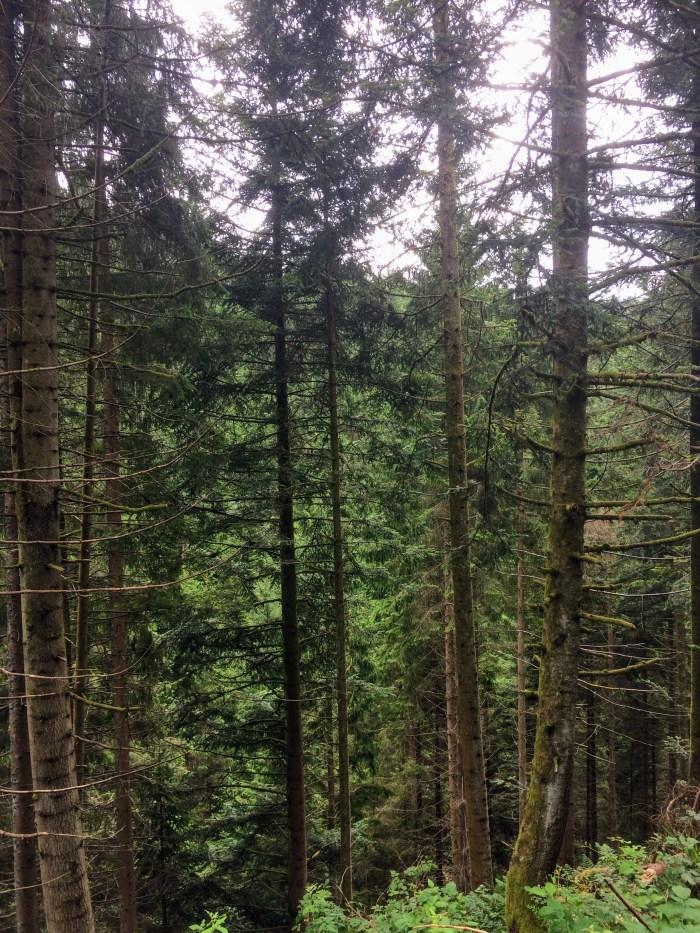 Black Forest 01