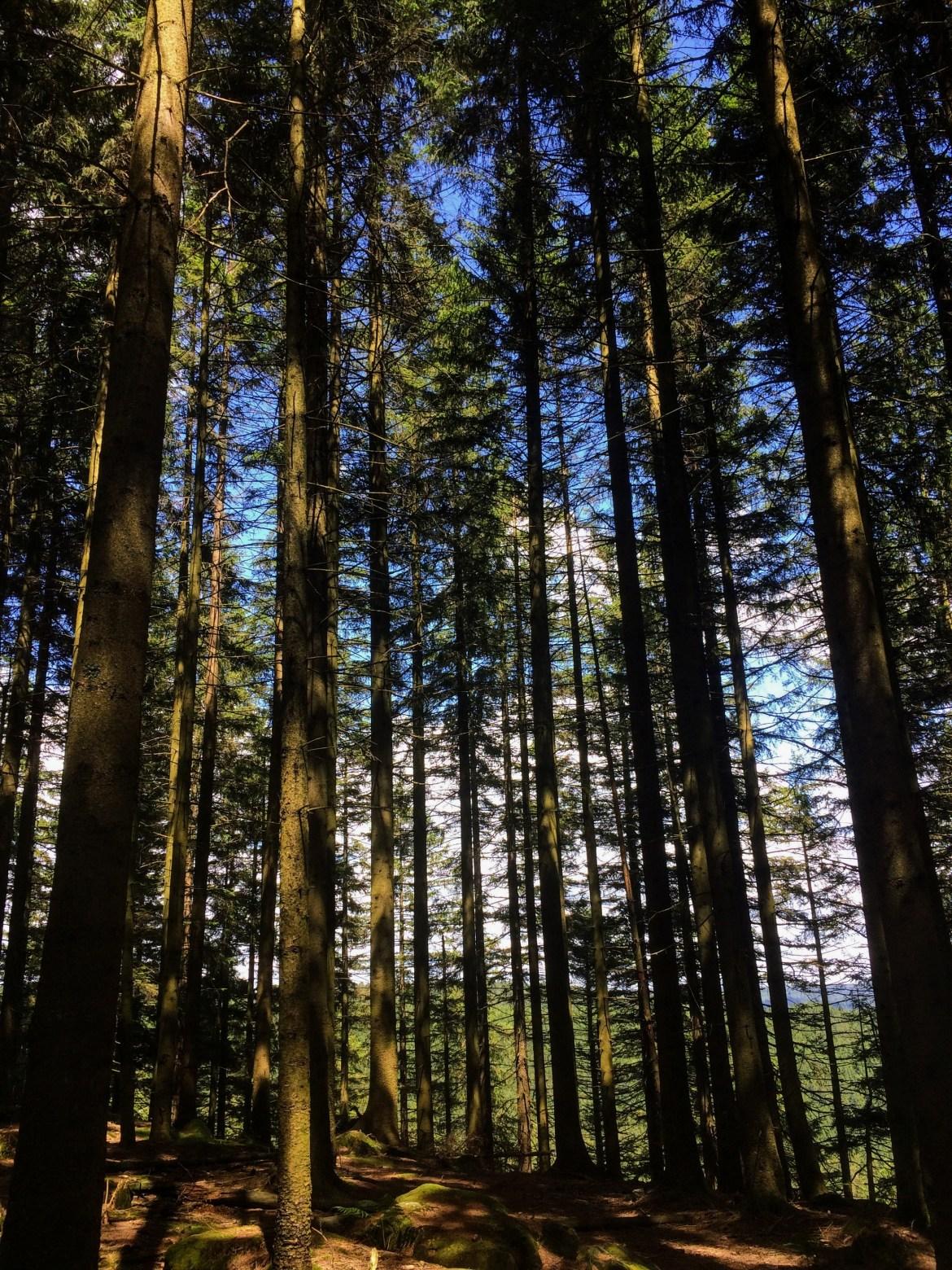 Black Forest 07