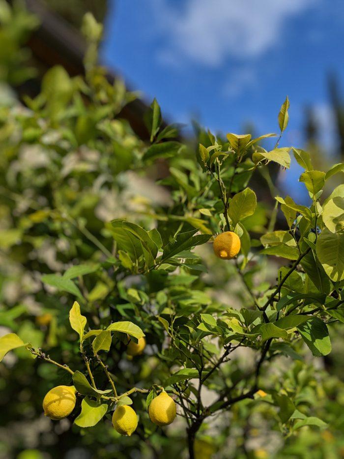 Fattoria Tuscany Lemon Groves Tuscany Italy Retreat