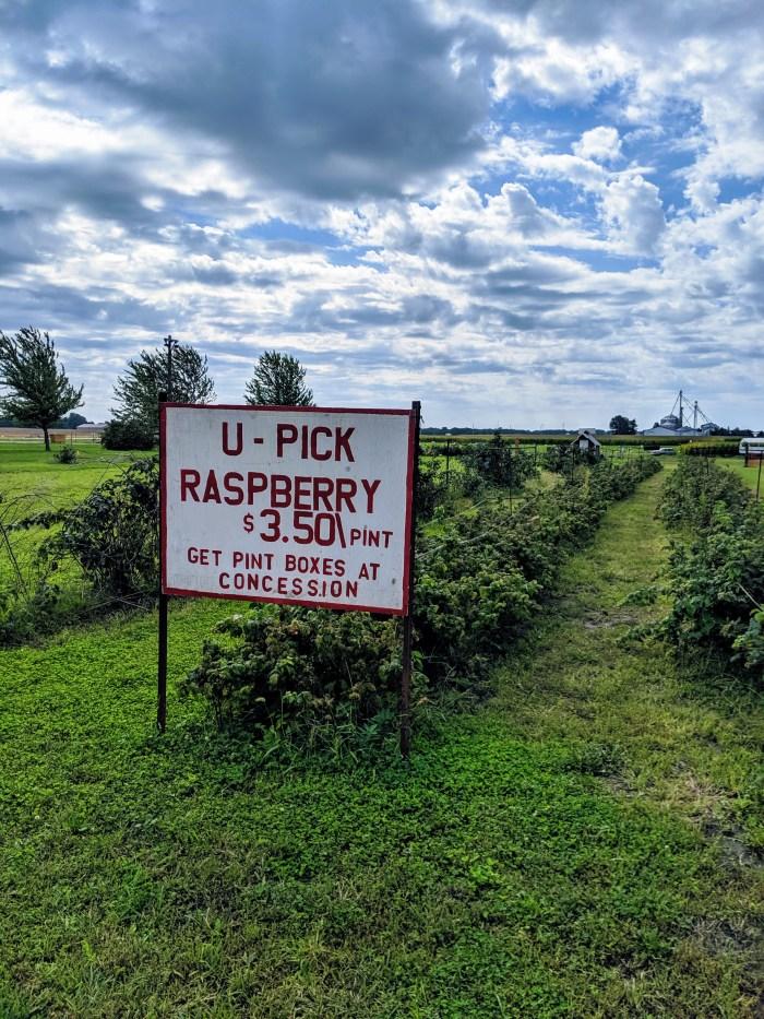 rock island days, u pick raspberries