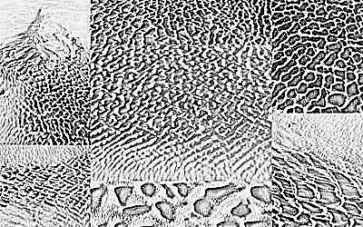 sand-web pencil sketch
